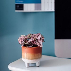 ombre-teracottta-brown-ceramic-plant-pot-with-pink-fittonia