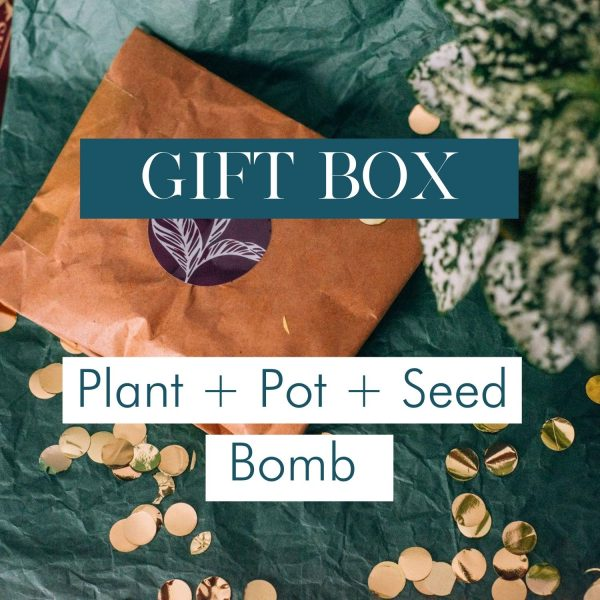 gift-box-plant-pot-seed-bomb-iris-co