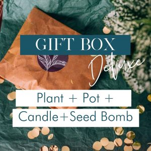 deluxe-gift-box-plant-pot-seed-bomb-candle-iris-co
