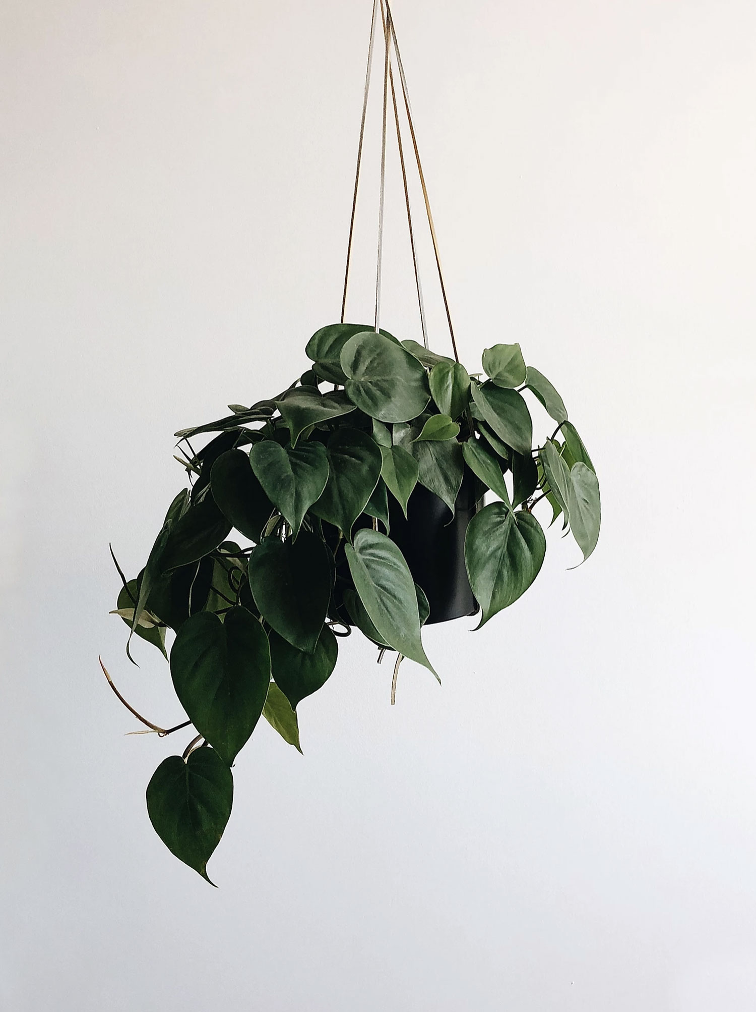 iris-co-london-house-plants-how-to-propagate-pothos-philodendron-1