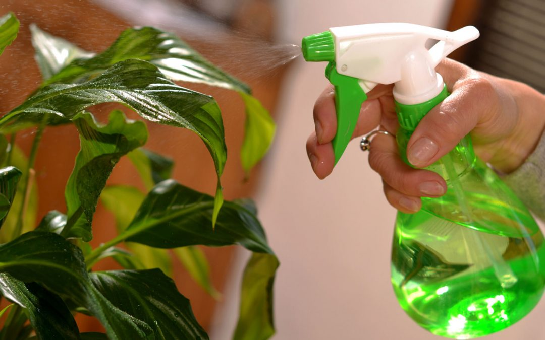 6 Ways to Keep Your Houseplants Happy in a Heatwave