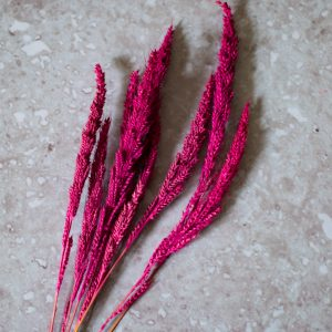 died pink amaranthus on a wooden desk