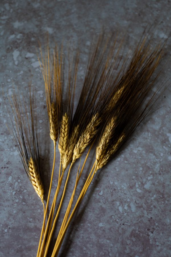 dried wheat sheaf stems