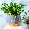 blue painted ceramic plant pot with a plant in