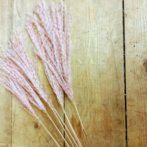 dried miscanthus grass pink on wood