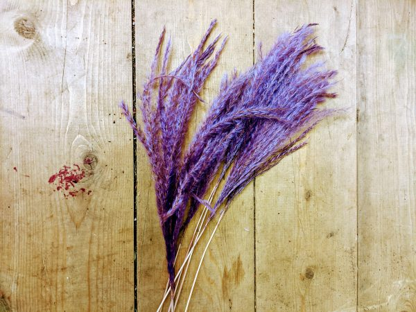dried miscacnthus grass lilac on wood