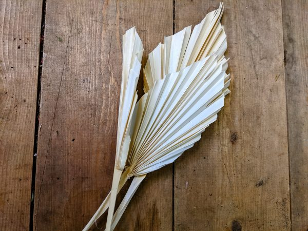 dried white spear palms
