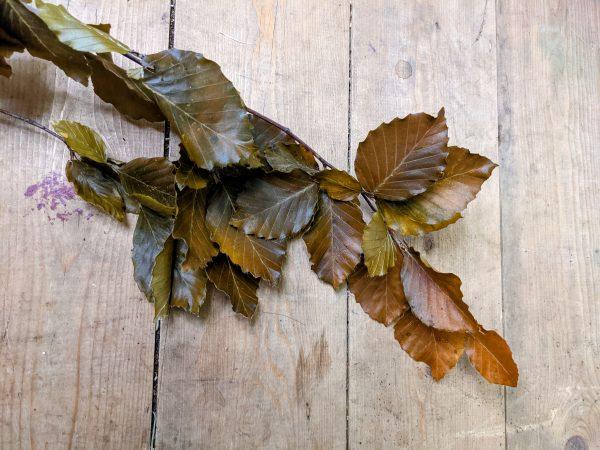 preserved beech leaves