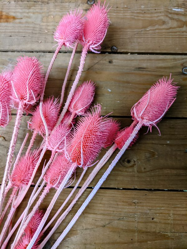 buy dried thistles pink