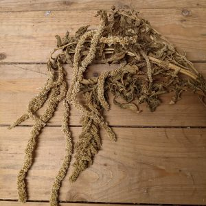 draping dried amaranthus on a wooden desk