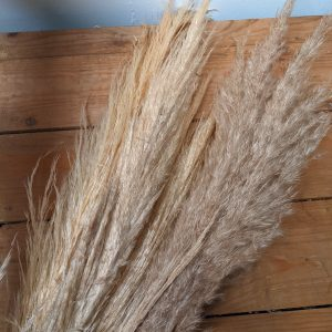 dried pampas grass on wooden desk